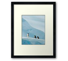 Gentoo Penguins on Ice Framed Print