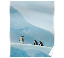 Gentoo Penguins on Ice Poster