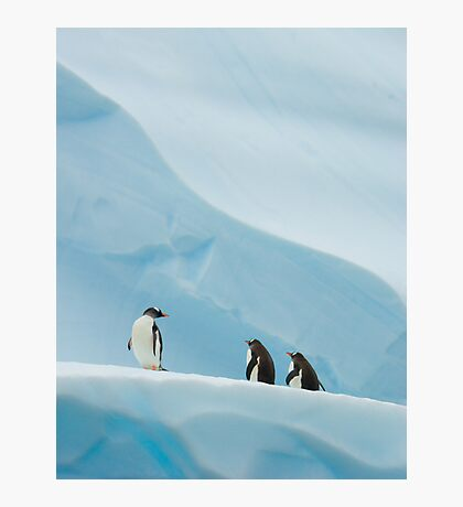 Gentoo Penguins on Ice Photographic Print