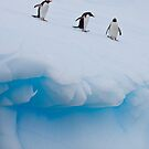 Penguins, Ice &amp; Water by Simon Coates