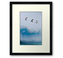 Penguins, Ice & Water Framed Print