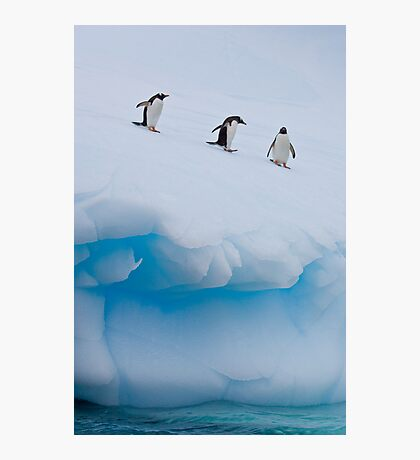 Penguins, Ice & Water Photographic Print