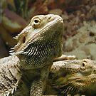 Pair of Lizards by KellyGirl