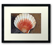 Red And White Seashell Framed Print