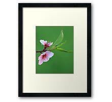 A Simple Peach Blossom Framed Print