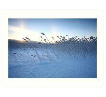 Winter calmness Art Print