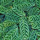 Patterns of Green by Penny Smith