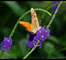 Butterfly  by greyrose