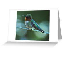 Humming Bird Close Up Greeting Card