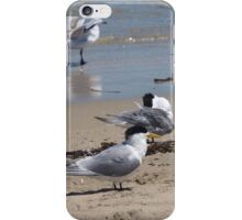 Terns on the Beach iPhone Case/Skin