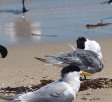 Terns on the Beach Sticker