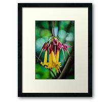 Hanging Flowers with Green Bokeh Framed Print