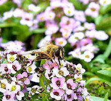 Bee by EssieMix