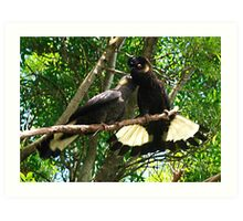 Yellow-Tailed Black Cockatoo - Male Adult & Young Art Print