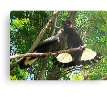Yellow-Tailed Black Cockatoo - Male Adult & Young Metal Print