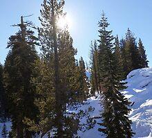 Snowy Scene 5 by Aaron Del Carlo