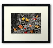 Black and White Leaves #3 Framed Print