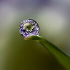 Flower Refraction by alliec