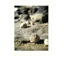 Rocks at Currimundi Beach Art Print