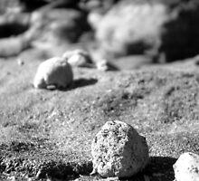 Rocks at Currimundi Beach Black and White by Jennifer Ellison