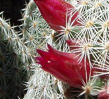 cactus2 by kateN