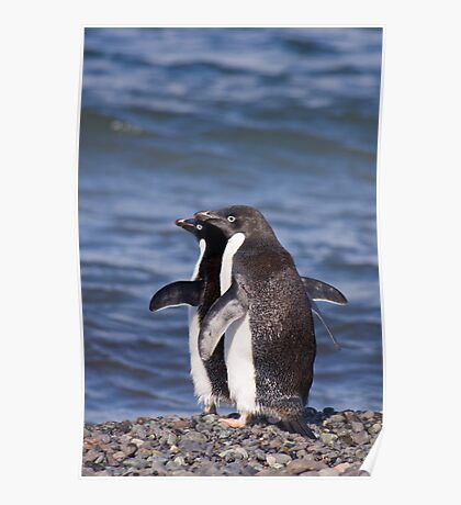 Adelie Penguins Poster