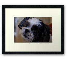 Mac Portrait Framed Print