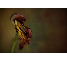 Faded Beauty of the Flower Photographic Print