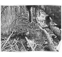 Bavarian Forest - B&W - Downed Tree Poster