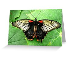 Let us fly towards happiness Greeting Card