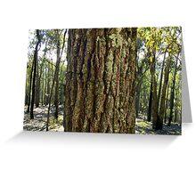 Red Ironbark, Eucalyptus sideroxylon. Greeting Card