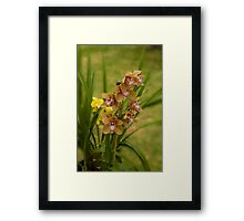 Coffee Orchid Framed Print