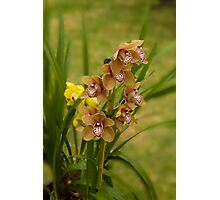 Coffee Orchid Photographic Print