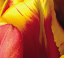 Tulip Red and Yellow Sticker