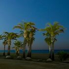 Palm trees by Xavier Aragonès
