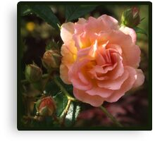 Rose Garden IIII Canvas Print