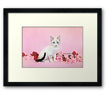 Kodiak on Carnations Framed Print