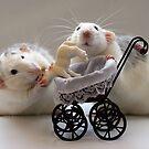 Trying to babysit the little lamb. by Ellen van Deelen