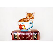 Teacup Kitten Photographic Print