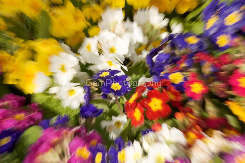 FLORAL ZOOM by GemPhotography