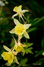 Columbine by Mary Campbell