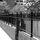 Fencing by bluekrypton