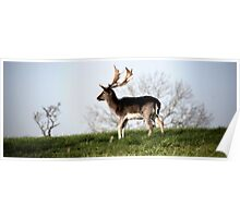 Phoenix Park Deer, Dublin Poster