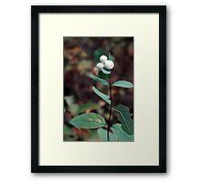 White Berries Framed Print