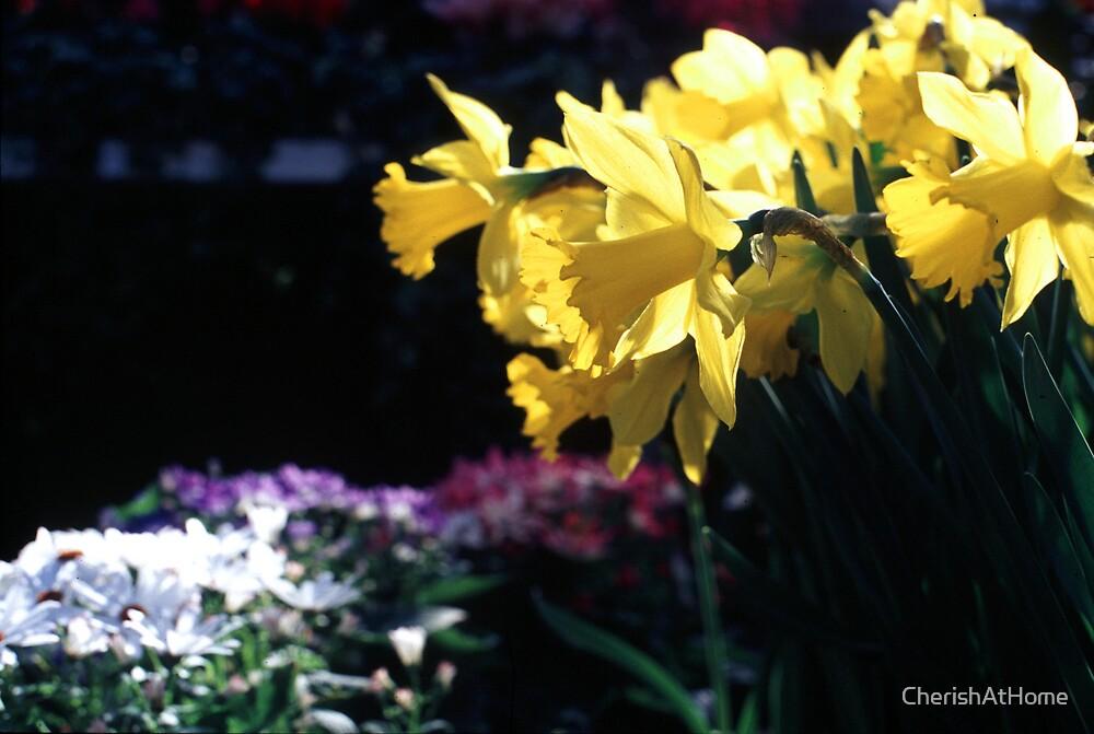 Daffodils II by CherishAtHome