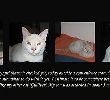 Stray Kitten by Ruth Palmer