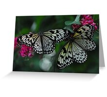 Two Black & White Butterflies Greeting Card