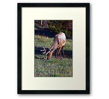 Morning Feeding Time Framed Print