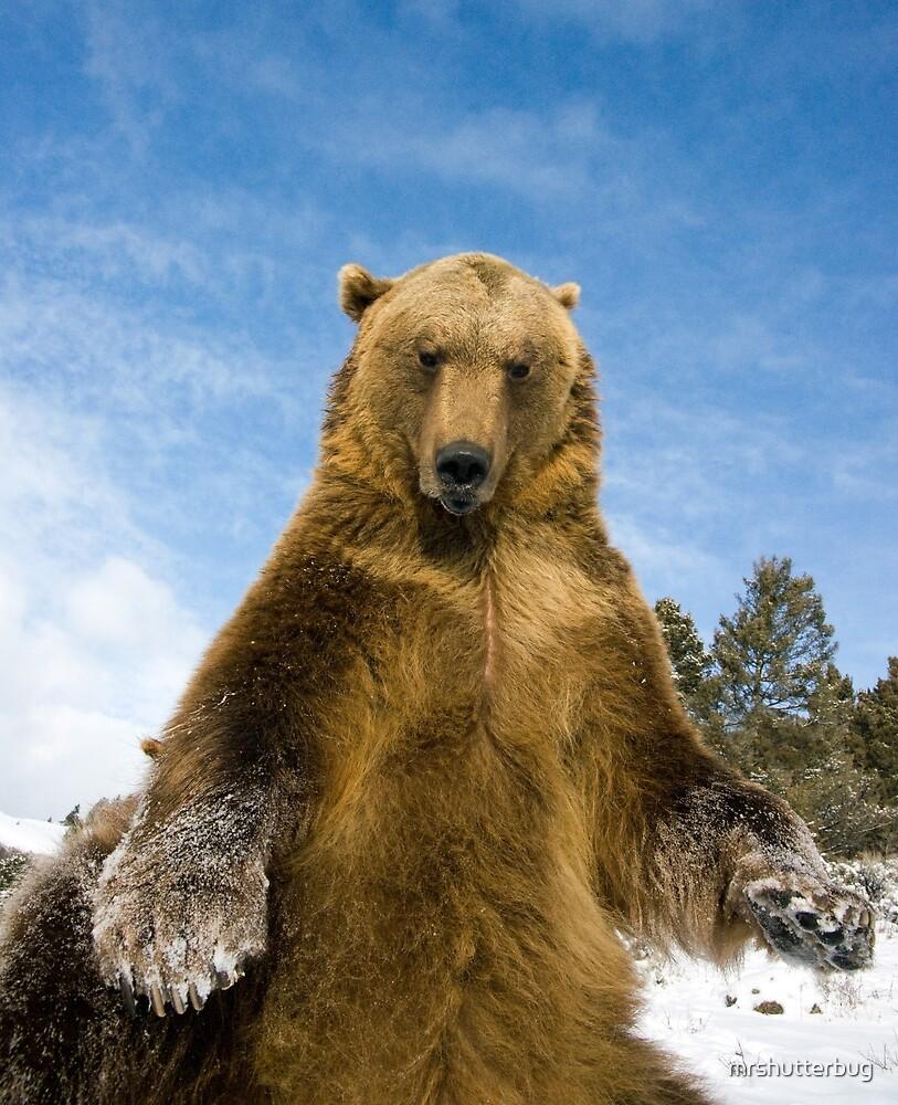 Grizzly Bear by mrshutterbug