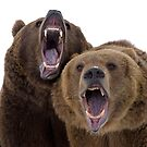 Grizzly Bears by mrshutterbug